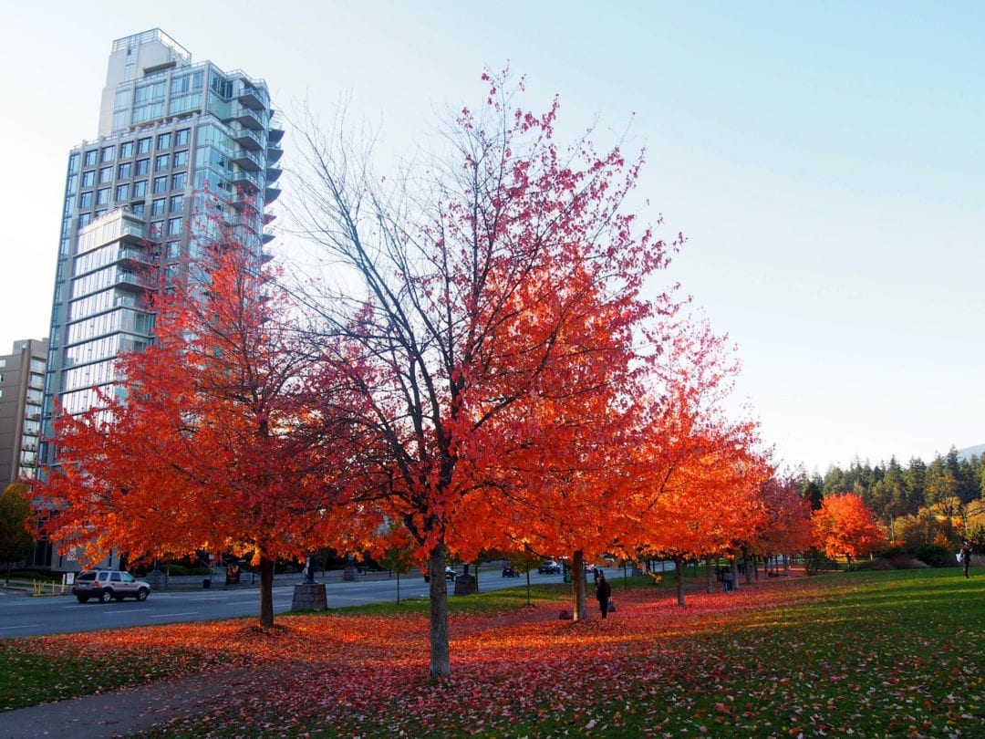 reasons to visit vancouver
